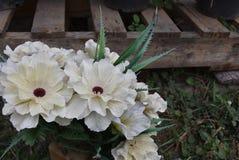 Белые цветки на поле стоковое фото rf