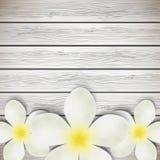 Белые цветки на древесине иллюстрация вектора