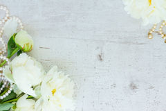 Белые цветки пиона Стоковые Изображения RF