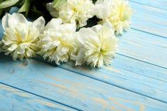 Белые цветки пиона Стоковые Фото
