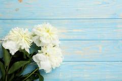 Белые цветки пиона Стоковое Изображение