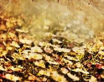 Белые цветки стоцвета, предпосылка весны Стоковое фото RF