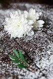 Белые цветки с зелеными лист на темной предпосылке Стоковое фото RF