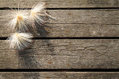 Белые цветки с мягкой тенью на предпосылке пакостного grunge винтажной деревянной Стоковое Изображение