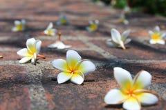 Белые цветки стоковая фотография rf