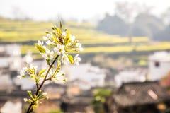 белые цветки Стоковое Фото