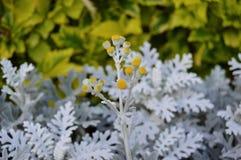 Белые цветковые растения стоковая фотография rf