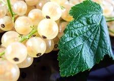 Белые ягоды и лист Стоковые Изображения