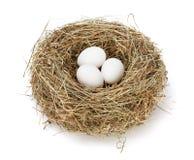 Белые яичка в гнезде Стоковая Фотография