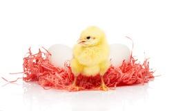 Белые яичка в розовом бумажном гнезде и малом желтом цыпленке Стоковое Фото