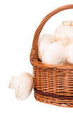 Белые champignons Стоковые Изображения