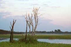 Белые Egrets Стоковые Фотографии RF