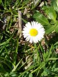 Белые flovers Стоковая Фотография