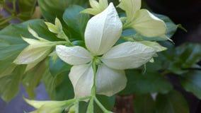 Белые flowes и листья Стоковые Изображения RF