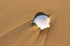 Белые seashells на песке Стоковое Изображение