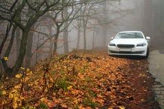 Белый автомобиль в лесе осени стоковое изображение