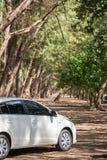 Белый автомобиль в сосновом лесе Стоковое фото RF