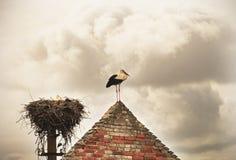 Белый аист (аист аиста) на крыше Стоковое Фото