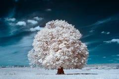 Белый вал Стоковое фото RF