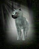 Белый волк, иллюстрация леса Стоковая Фотография RF