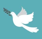 Белый голубь на голубой предпосылке Стоковые Фото