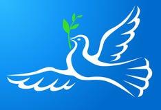 Белый голубь с ветвью в голубом небе Стоковое Изображение RF