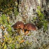 Белый гриб Стоковое фото RF