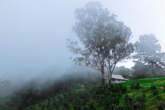Белый Дом и течение тумана Стоковые Изображения RF