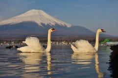 Белый лебедь и Mt Фудзи Стоковая Фотография RF