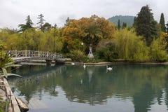 Белый лебедь (olor Cygnus) в пруде Стоковые Изображения RF