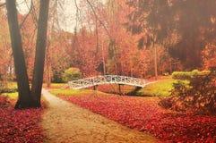 Белый деревянный мост в парке Стоковое Изображение RF