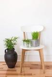 Белый деревянный стул с зелеными растениями Стоковые Изображения