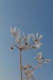 Белый завод зимы стоковое фото