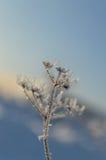 Белый завод зимы Стоковое Изображение