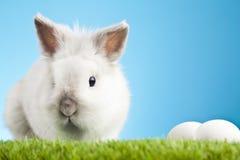 Белый зайчик пасхи сидя в зеленой траве с покрашенными яичками вокруг Стоковые Фотографии RF