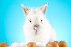 Белый зайчик пасхи сидя с покрашенными яичками вокруг Стоковое Изображение