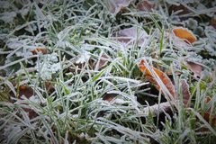 Белый заморозок на траве Стоковое фото RF