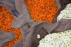 Белый и оранжевый цветок Стоковые Изображения