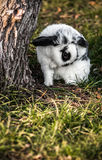Белый и черный зайчик - кролик на траве Стоковое Изображение RF