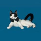 Белый и черный кот лежит на сини стоковое изображение rf