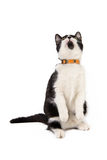 Белый и черный кот смотря вверх стоковое фото rf