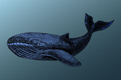 Белый кит под водой иллюстрация вектора