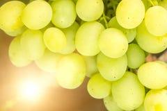 Белый конец-вверх виноградины таблицы Стоковое Изображение RF