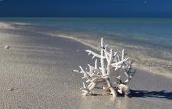 Белый коралл на белом песчаном пляже Стоковые Фотографии RF