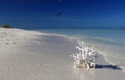 Белый коралл на одичалом песчаном пляже Стоковое фото RF