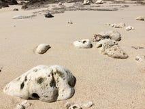 Белый коралл на песке Стоковые Изображения