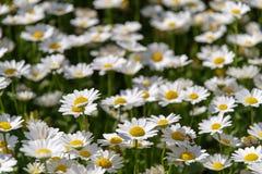 Белый космос на саде Стоковые Изображения