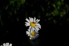 Белый космос на саде Стоковое Изображение