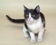 Белый котенок с серый сидеть пятен Стоковое Фото