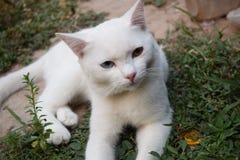 Белый кот в саде Стоковые Фотографии RF
